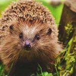Apex Planning for Wildlife