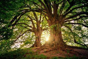 Apex Ancient Woodland